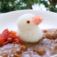 白文鳥カレー